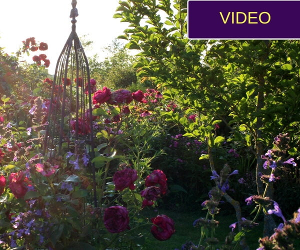 Giedrės sodelis rožynas viršelis
