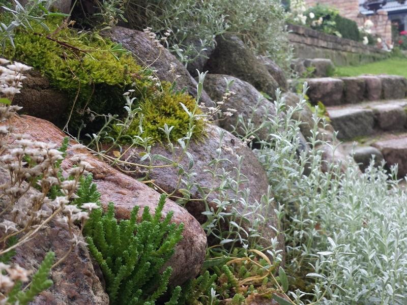 alpinariumas akmenys Geltonas karutis