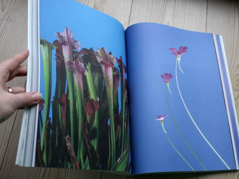 Knyga Fotosintezė graziausia 2019 metų knyga, paskelbta Vilniaus knygų mugėje. Nuotr. L.Liubertaitė
