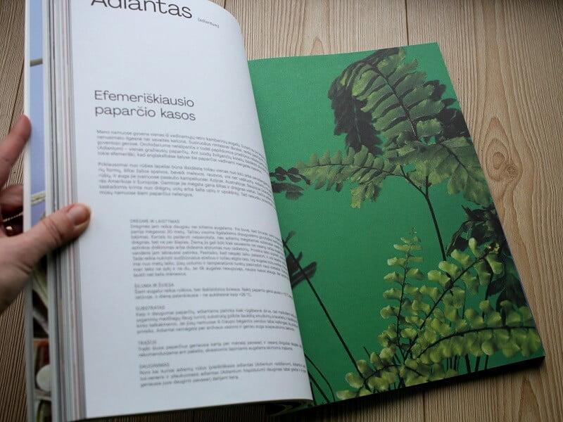 Knyga fotosintezė