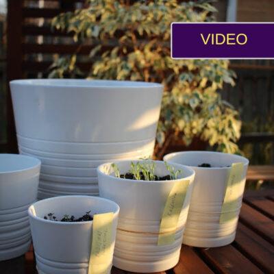 Kaip sėti žalumynus į vazonus – paprasta instrukcija