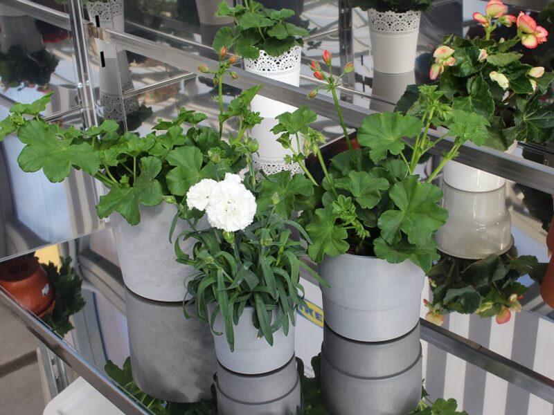 Balkoninės gėlės betono imitacijos vazone. Nuotr. L.Liubertaitė