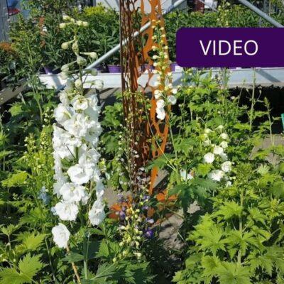 9 vasarą žydinčios daugiametės gėlės – pasisemkit idėjų gėlynui