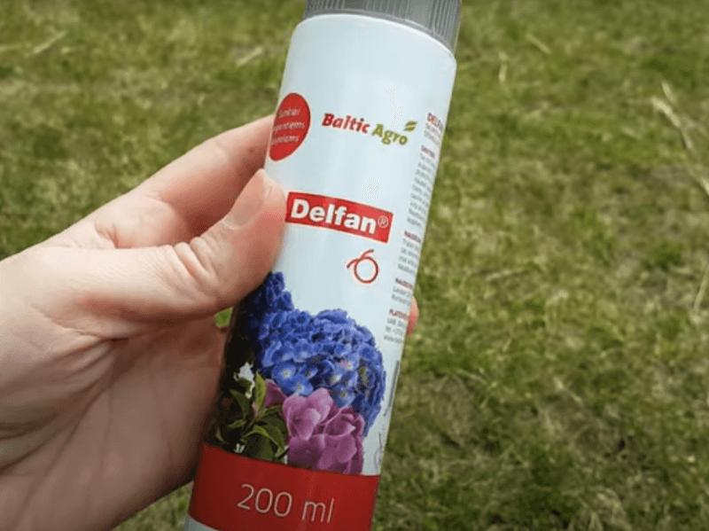 """""""Delfan"""" tirpalas iš """"Baltic agro"""" idealiai tinka skurstantiems, persodintiems, užmirkusiems arba sausros pažeistiems bei dėl visų kitų priežasčių blogai augantiems augalams, todėl jau ne kartą pasiteisino ir stiprinant drastiškai nugenėtas tujas. Nuotr. L. Liubertaitė"""