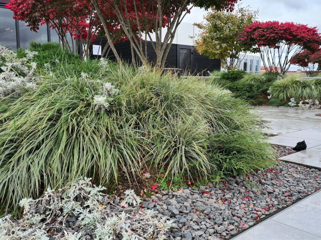 Kiliminiai augalai suteikia bendram želdinių vaizdui tekstūros ir paslepia inžinerinius terasos sprendimus. Nuotr. L. Liubertaitė