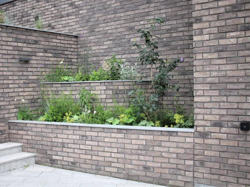 šlaito apželdinimas. Alyvos medelis buvo kone pirmasis pasodintas augalas šiame sklype. Jis iki šiol puikiai atlaikė statybas ir orų permainas. Nuotr. L. Liubertaitė