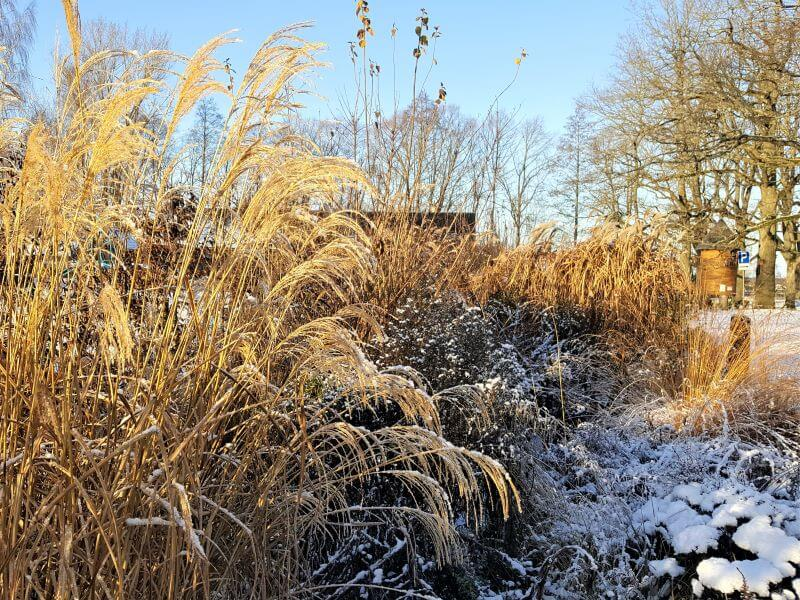 Šaltuoju sezonu nesiimkite vertinti augalų potencialo, nes pavasarį jie dar gali nustebinti savo spalvomis ir grožiu. Nuotr. L. Liubertaitė