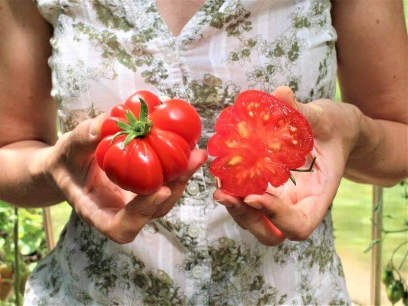 Tradicinio skonio, bet labai išraiškingos išvaizdos pomidoras 'Costoluto fiorentino'. Nuotr. L. Liubertaitė
