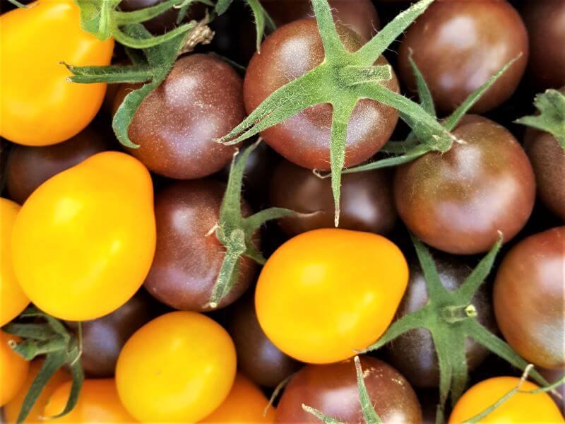 Geriausios pomidorų veislės 2020: niekada nenuviliantys 'Medovaja kaplia' ir 'Black cherry' pomidoriukai. Nuotr. L. Liubertaitė