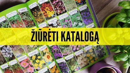 Augalų katalogas