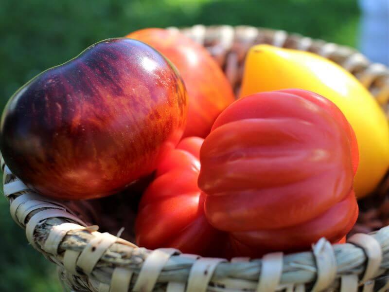 Įdomių veislių pomidorų sėklos: iš kur jų gauti? Nuotr. L. Liubertaitė