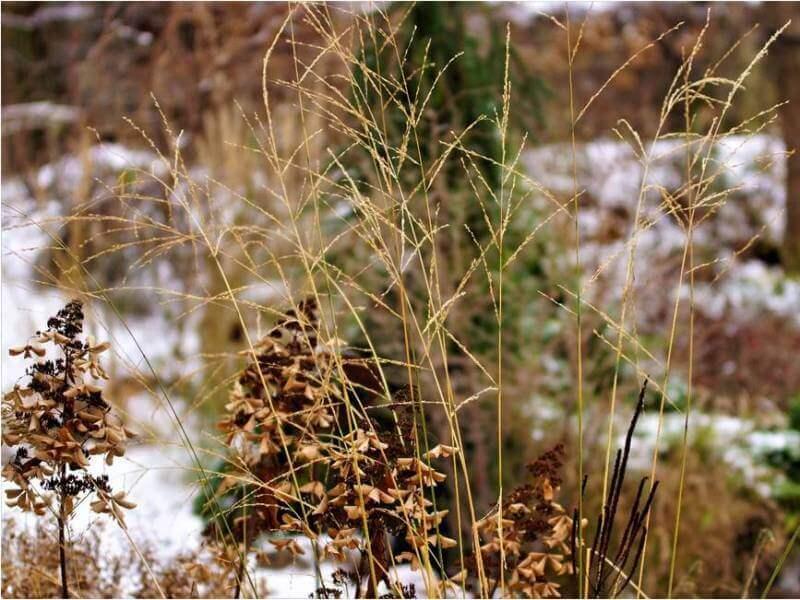 Daugiamečiai žoliniai augalai dekoratyviai atrodo net ir žiemą. Nuotr. L. Liubertaitė