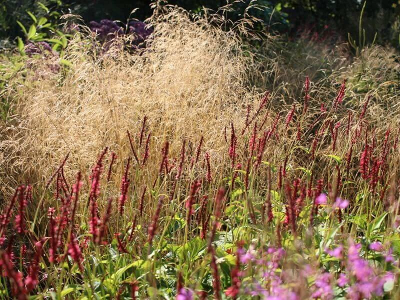 Varpiniai augalai dažnai užima didelę dalį natūralistinio gėlyno kompozicijos. Nuotr. L. Liubertaitė