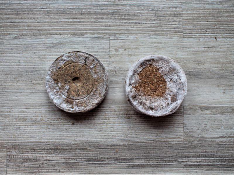 Kairėje – durpių tabletė, dešinėje – kokosų plaušo. Nuotr. L. Liubertaitė