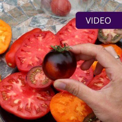 Kokie pomidorai vertingiausi? Atsako dietistė Vaida Kurpienė