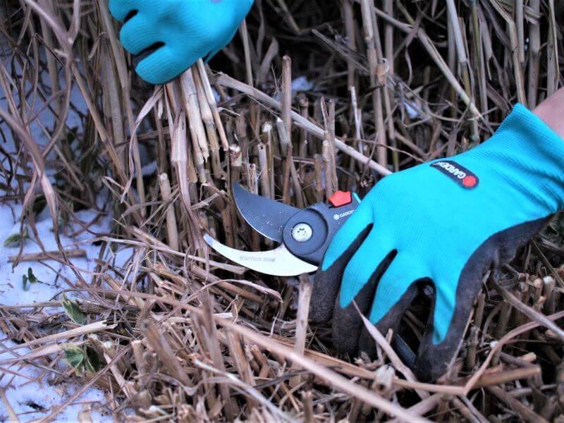 """Varpinių augalų priežiūra nesudėtinga, kai naudojami kokybiški įrankiai. Aš naudoju """"Gardenos"""" sekatorių. Nuotr. L. Liubertaitė"""