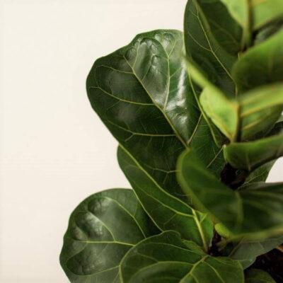Kambarinių augalų priežiūra pavasarį: keičiam režimą