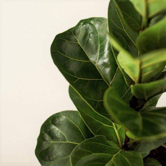 Kambarinių augalų priežiūra_viršelis