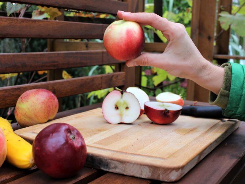 Mano koloninės obels vaisiai vėlyvą rudenį. Nuotr. L. Liubertaitė
