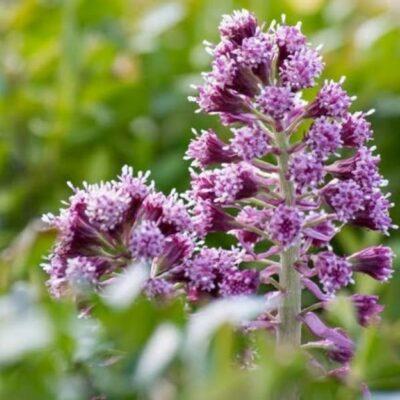 Pirmosios pavasario gėlės: apžvalga ir sodinimo rekomendacijos