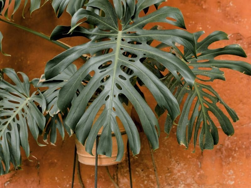 Šiltąjį sezoną kambariniams augalams naudinga praleisti lauke. Nuotr. iš Pexels.com