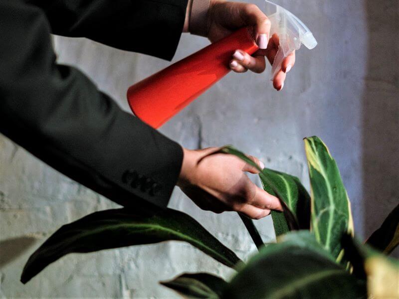 Vietoje dušo augalus geriau apipurkšti vandeniu iš purkštuvo. Nuotr. iš Pexels.com