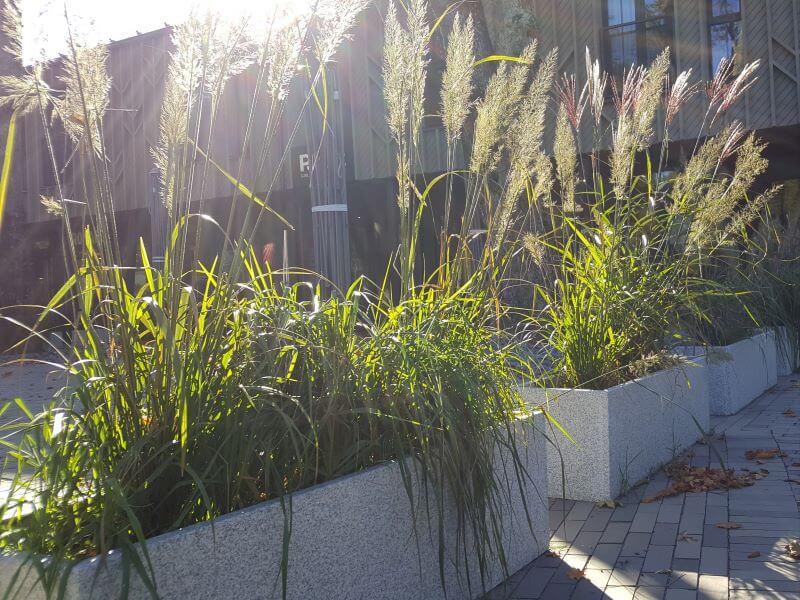 Varpiniai augalai vazonuose