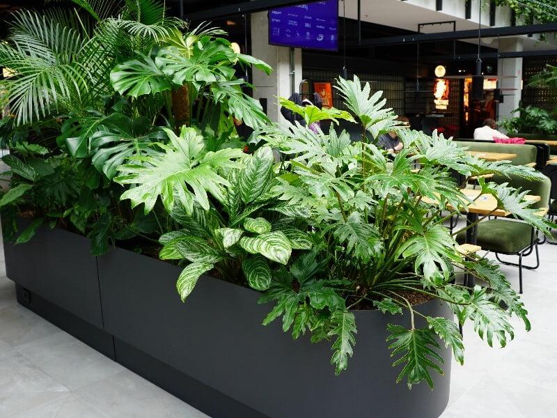 Egzotiniai augalai sėkmingai išgyveno statybų etapą. Nuotr. L. Liubertaitė