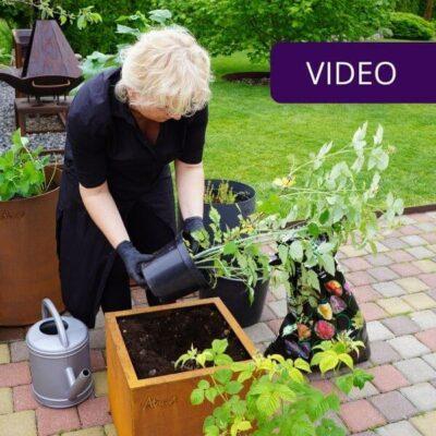 Kaip apželdinti terasą V