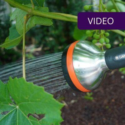 Kaip laistyti augalus – sunaudokite mažiau vandens ir laiko
