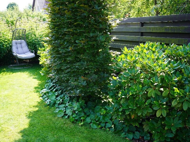 Visžalis augalų kampelis suteikia kiemui gyvybės ištisus metus, o buko siena užstoja vaizdą už tvoros. Nuotr. L. Liubertaitė