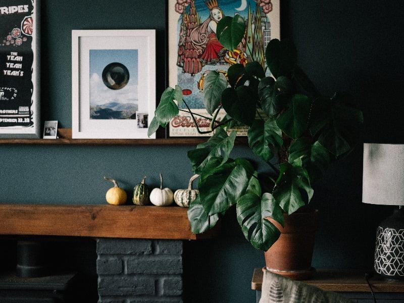 Kambariniai augalai gyvuos daug sėkmingiau, jei pasirinksite juos pagal turimas namų sąlygas. Nuotr. Unsplash.com