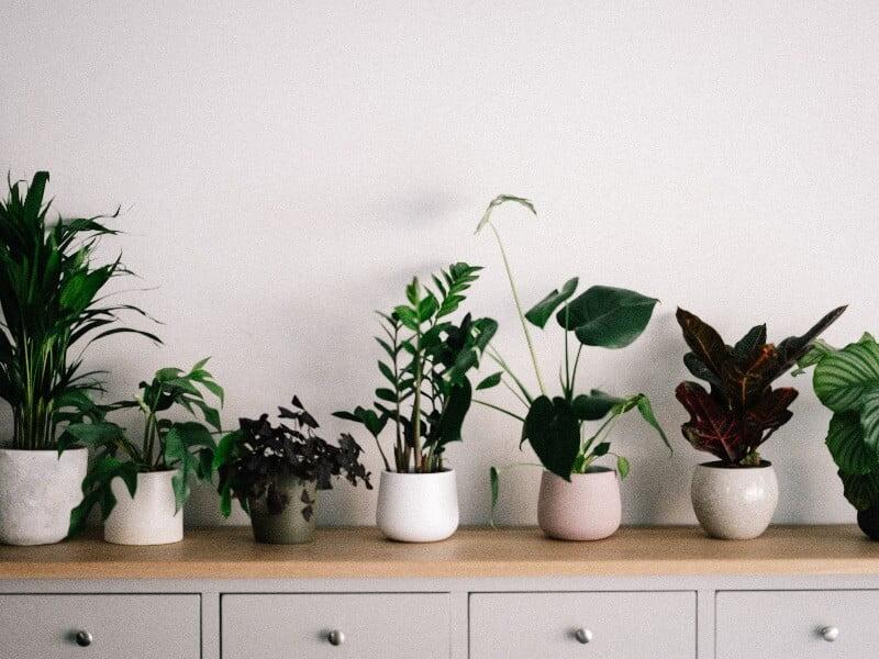 Kad turimų augalų kompozicija būtų harmoninga — vertėtų rinktis vienodus vazonus. Nuotr. Unsplash.com