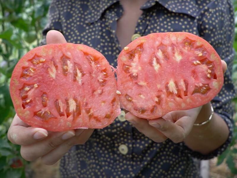 Lietuviškas pomidoras 'Anupras'. Nuotr. Lina Liubertaitė