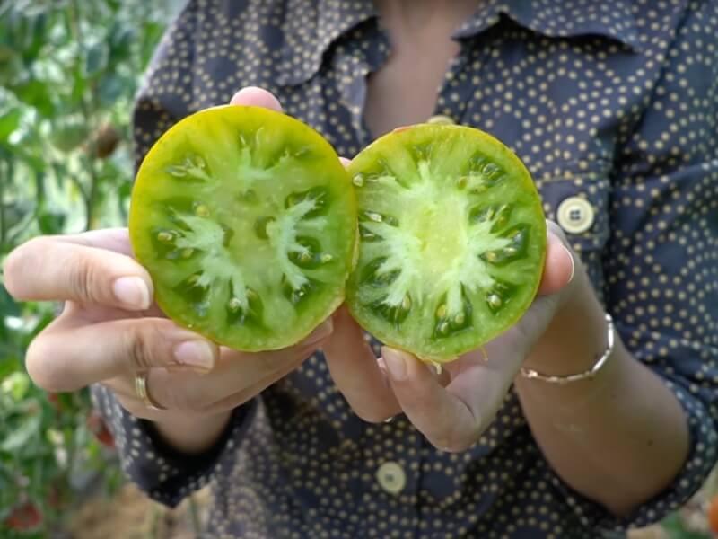 Tikri gražuoliai Izumrudnoe Jabloko' ('Emerald Apple'). Nuotr. Lina Liubertaitė